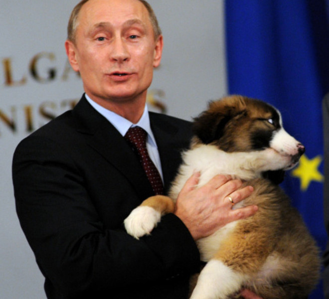 Russian Prime minister Vladimir Putin hugs a Bulgarian shepherd dog, a present from his Bulgarian counterpart Boyko Borisov after their press conference in Sofia on November 13, 2010. Bulgaria's state energy holding BEH and Russian gas giant Gazprom set up on Saturday a joint venture to build and operate the Bulgarian stretch of the South Stream gas pipeline from Russia to southern Europe.         TOPSHOTS/AFP PHOTO/NIKOLAY DOYCHINOV