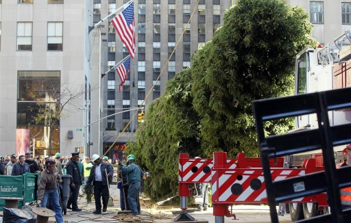NEW YORK - NOVEMBER 12: Workers install the new Rockefeller Center Christmas tree November 12, 2010 in New York City. Veteran FDNY firefighter Peter Acton, who worked at Ground Zero, donated the 12-ton, 74-foot Norway spruce which was cut down at his Mahopac, New York home.   Mario Tama/Getty Images/AFP== FOR NEWSPAPERS, INTERNET, TELCOS & TELEVISION USE ONLY ==