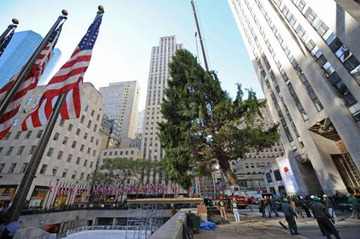 The 74 foot (22.5 meter) Norway spruce that will become the Rockefeller Center Christmas tree is lifted into place by a crane on November 12, 2010 in New York.  AFP PHOTO/Stan Honda