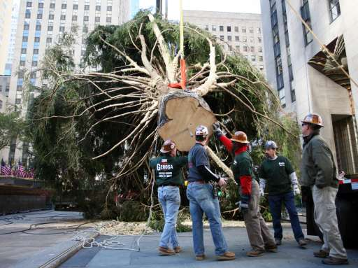 Workers try to lift the Rockefeller Center Christmas tree into the place on November 12, 2010 in New York. AFP PHOTO Kimihiro Hoshino