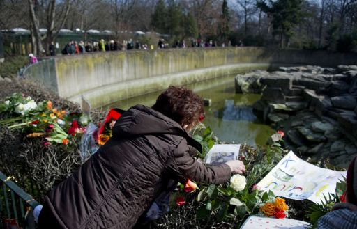 A woman lays down flowers at the enclosure of Knut, Germany's famous polar bear at the Berlin zoo (Zoologischer Garten) March 20, 2011. Germany was in stunned mourning after the sudden and premature death of Knut, Berlin's world-famous polar bear, who died on March 19, 2011, at the end of what animal welfare groups said was an unhappy, short life.  AFP PHOTO / JOHANNES EISELE