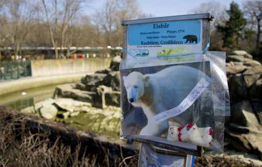 A picture of Knut the polar bear can be seen in front his enclosure at the Berlin zoo (Zoologischer Garten) March 20, 2011. Germany was in stunned mourning after the sudden and premature death of Knut, Berlin's world-famous polar bear, who died on March 19, 2011, at the end of what animal welfare groups said was an unhappy, short life.  AFP PHOTO / JOHANNES EISELE