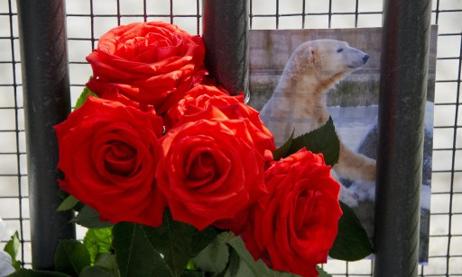 Red roses and a picture of Knut the polar bear can be seen in front of the entrance to the Berlin zoo (Zoologischer Garten) March 20, 2011. Germany was in stunned mourning after the sudden and premature death of Knut, Berlin's world-famous polar bear, who died on March 19, 2011, at the end of what animal welfare groups said was an unhappy, short life.  AFP PHOTO / JOHANNES EISELE
