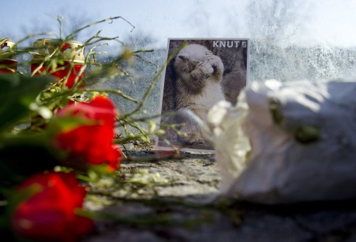 Flowers and a picture of Knut the polar bear can be seen at his enclosure at the Berlin zoo (Zoologischer Garten) March 20, 2011. Germany was in stunned mourning after the sudden and premature death of Knut, Berlin's world-famous polar bear, who died on March 19, 2011, at the end of what animal welfare groups said was an unhappy, short life. AFP PHOTO / JOHANNES EISELE