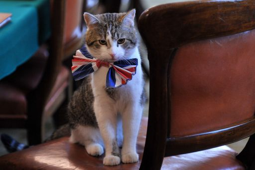 Larry, the 10 Downing Street cat, sits on a chair wearing a British Union Jack bow tie ahead of the Downing Street street party, in central London, on April 28, 2011. Downing Street will hold a street party tomorrow to celebrate the royal wedding of Britain's Prince William and Kate Middleton at Westminster Abbey, on April 29, 2011. AFP PHOTO/BEN STANSALL/WPA POOL
