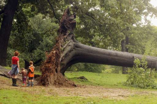NEW YORK, NY - AUGUST 28: A family inspects a downed tree in Central Park after Hurricane Irene dumped more than six inches of rain on August 28, 2011 in New York City. The hurricane hit New York as a Category 1 storm before being downgraded to a tropical storm.   Mario Tama/Getty Images/AFP== FOR NEWSPAPERS, INTERNET, TELCOS & TELEVISION USE ONLY ==