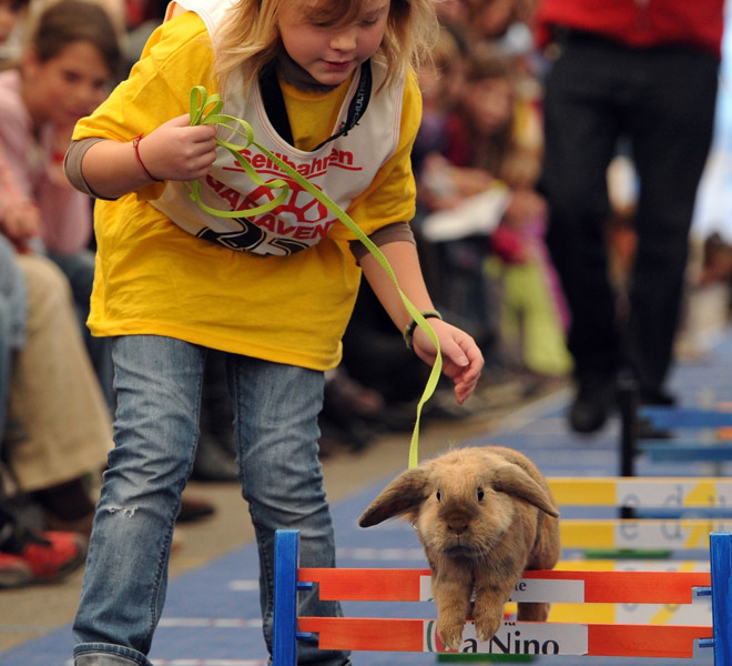 WOLLERAU, SWITZERLAND - OCTOBER 30:  A girl leads her rabbit over a hurdle at an obstacle course during the first European rabbit hopping championships, which Lada Sipova-Krecova of Czech Republic won, on October 30, 2011 in Wollerau, Switzerland. Rabbit hopping is a growing trend among rabbit owners in Central Europe.  (Photo by Harold Cunningham/Getty Images)
