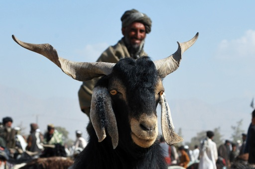 A Pakistani vendor stands next to his goat as he waits for customers at an animal market for the Muslim Eid al-Adha festival in Quetta on November 3, 2011. Muslims across the world are preparing to celebrate the annual festival of Eid al-Adha, or the Festival of Sacrifice, which marks the end of the Hajj pilgrimage to Mecca and in commemoration of Prophet Abraham's readiness to sacrifice his son to show obedience to God. AFP PHOTO / BANARAS KHAN