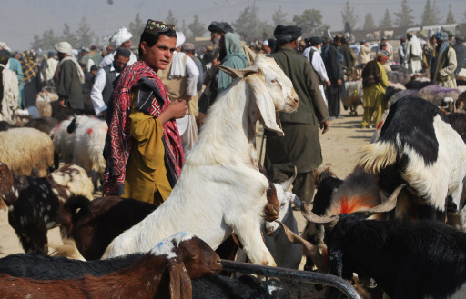 Pakistani Muslims buy goats at an animal market for the Muslim Eid al-Adha festival in Quetta on November 3, 2011. Muslims across the world are preparing to celebrate the annual festival of Eid al-Adha, or the Festival of Sacrifice, which marks the end of the Hajj pilgrimage to Mecca and in commemoration of Prophet Abraham's readiness to sacrifice his son to show obedience to God. AFP PHOTO / BANARAS KHAN