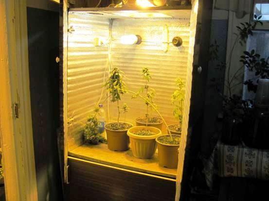Шкаф для выращивания канабиса 23