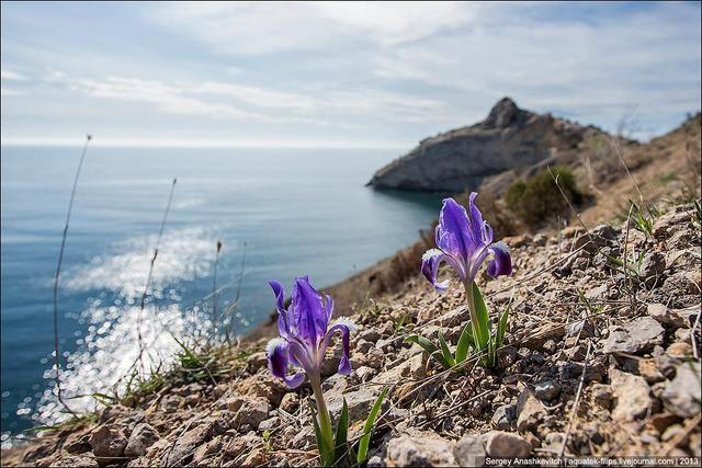 Цветы крымские