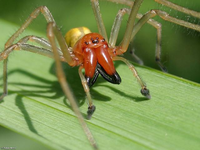 пауки одесской области фото