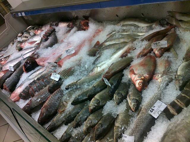 Картинки по запросу Нас кормят смертельно опасной рыбой? картинки