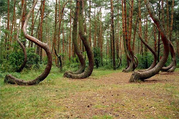 деревья украины фото и названия