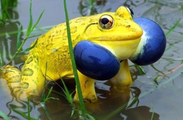 Топ 10 самых удивительных лягушек (фото) - Последние мировые ...