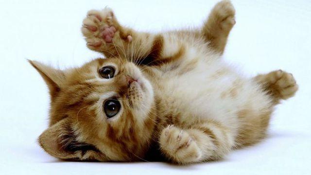 картинки самые милые котята в мире
