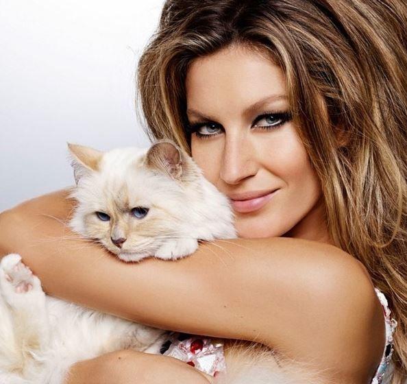 Знаменитости любят кошек: ТОП-10 звездных котов - Новости ... жизель бюндхен инстаграм