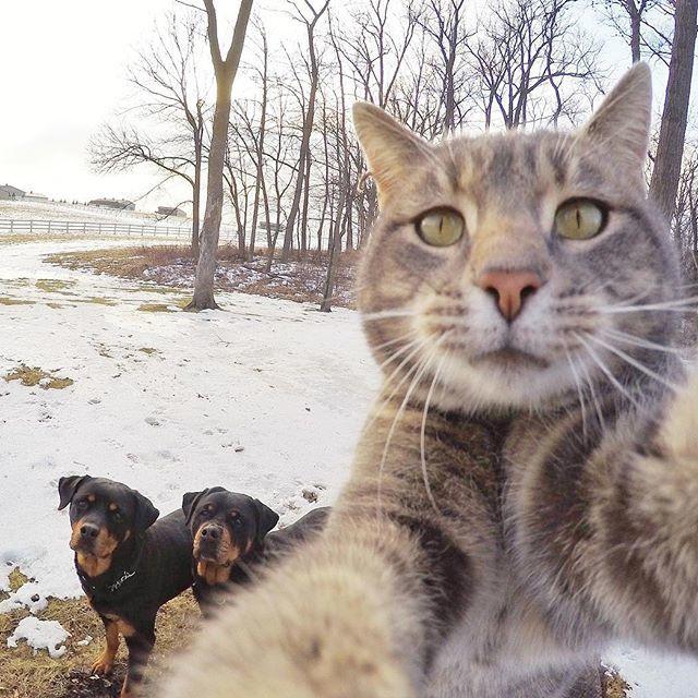 Инстаграм селфи кот