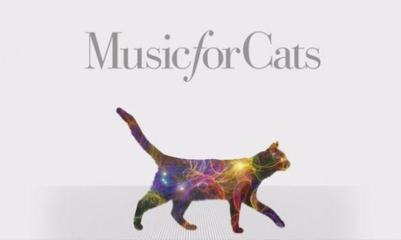 Житель америки выпустил 1-ый вмире музыкальный альбом для кошек