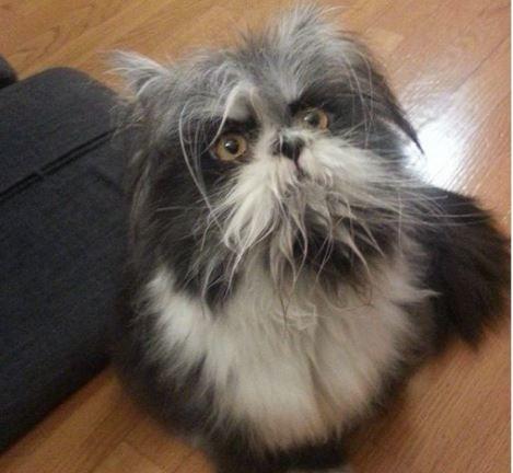 Сонник кот, ключевые значения снов в Соннике: кот.