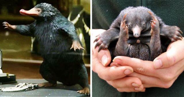 В австралийском зоопарке вылупился нюхль из «Фантастических тварей»