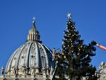 Папе Римскому привезли рождественскую елку (фото)