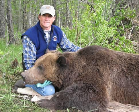 Второй по величине зарегистрированный медведь гризли
