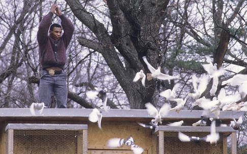 С 6 марта Майк Тайсон будет рассказывать всему миру о голубях.