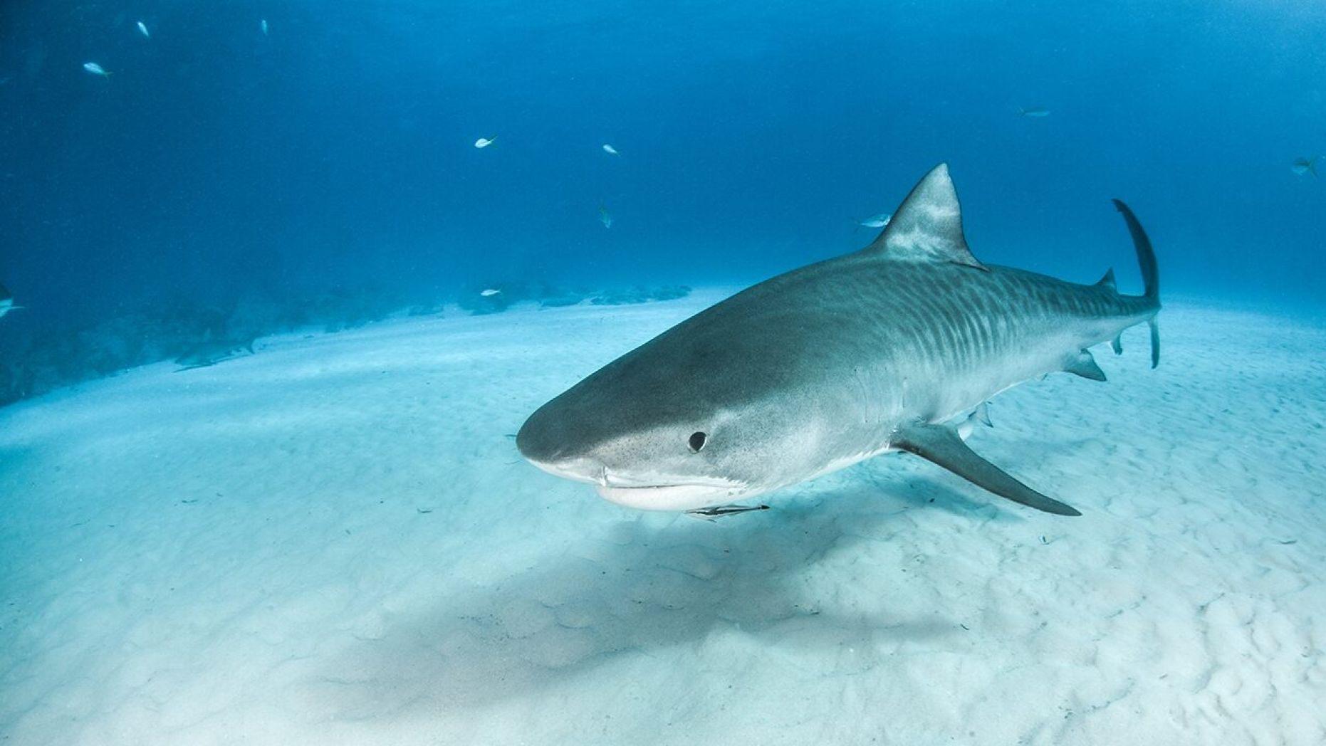 Акулу весом 314 кг поймал ребенок из Австралии, фото | СЕГОДНЯ