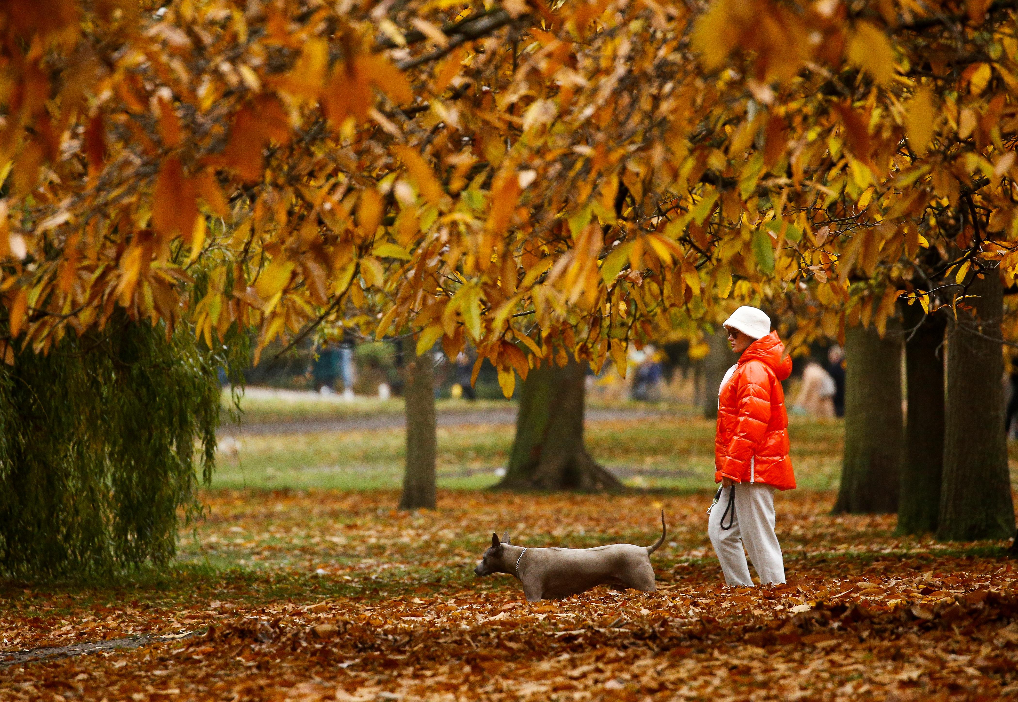 Погода осенью 2020 - синоптики прогнозируют много дождей и прохладу |  СЕГОДНЯ